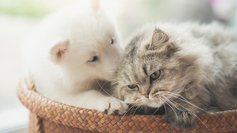 犬派vs猫派対決 多かったのは リサーチ 市場調査ならクロス